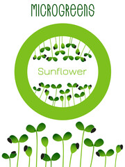 Microgreens Sunflower. Seed packaging design, round element in the center. Sprouting seeds of a plant