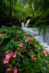 Beautiful flower (Habenaria orchid) and waterfall in deep forest at Phu Hin Rong Kla National Park, Thailand.