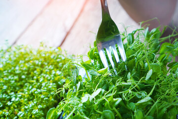Microgreen sprouts with fork in female hands. Healthy vegan food.