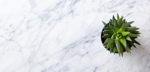 Home plant succulent, aloe on a table. Marble background. Copy space. Top view.