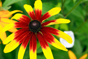Nice Red And Yellow Flower