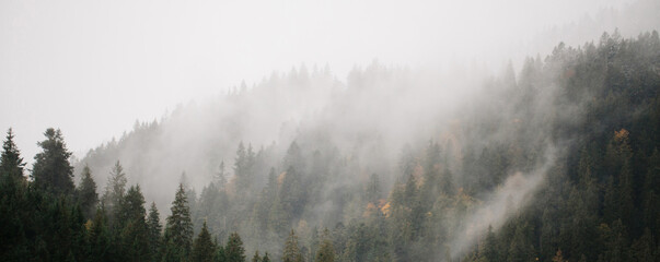 Forest with fog over the mountains. Website header or banner