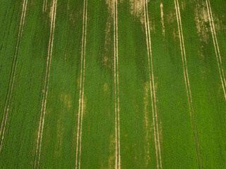 Aerial view of green soybean field. Agricultural industry
