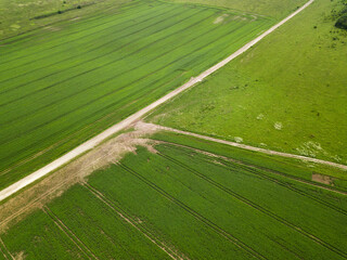 Top view of green soybean fields and country roads. Agriculture