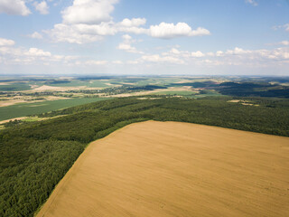 Top view of a field of ripe rapeseed surrounded by green forest. Rural landscapes
