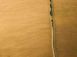 Top view of a golden field of ripe rapeseed with a road. Harvest time