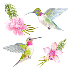 Watercolor tropical colibri hummingbird with orchid and peony flower, bamboo leaves, areca palm.