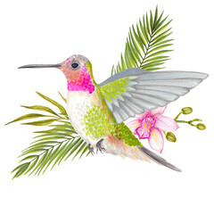 Watercolor tropical colibri hummingbird with orchid flower, bamboo leaves, areca palm.