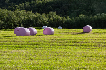 Rural landscape with hay bales packed in pink plastic on the field with green grass surrounded with the trees, Finnmark, Norway