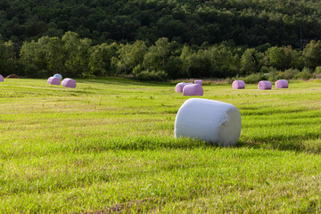Rural landscape with hay bales packed in white and pink plastic on the field with green grass surrounded with the forest, Finnmark, Norway