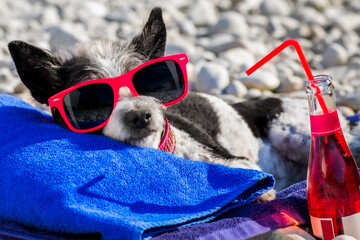 Foto op Plexiglas Crazy dog dog siesta on towel with umbrella and cocktail