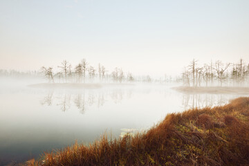 Swampy forest lake in a thick mysterious fog at sunrise. Cenas tirelis, Latvia. Golden sunlight through the evergreen tree trunks. Symmetry reflections on the water. Idyllic autumn landscape