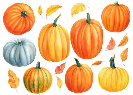 Set of pumpkins on isolated white background, watercolor illustration, clip art