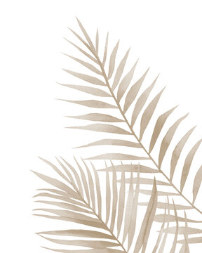 Beige dried palm leaves. Tropical fronds. Watercolour illustration isolated on white background.