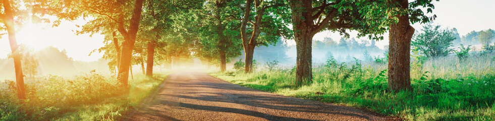 Wall Mural - Asphalt road on beautiful early autumnal morning