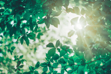 New fresh leaves on green spring background