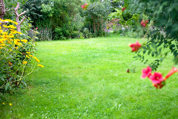 Beautiful backyard garden landscape. Green lawn background in the centre.