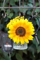 Sommer-Gartendekoration mit Sonnenblume in Glasvase hängend am Krätertrockner
