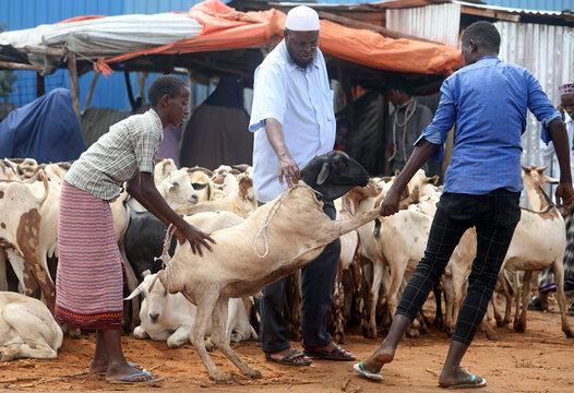 Somali residents buy a sheep at a livestock market ahead of the Eid al-Adha festival, amid the coronavirus disease (COVID-19) pandemic, in Mogadishu