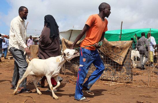 Somali residents buy a goat at a livestock market ahead of the Eid al-Adha festival, amid the coronavirus disease (COVID-19) pandemic, in Mogadishu