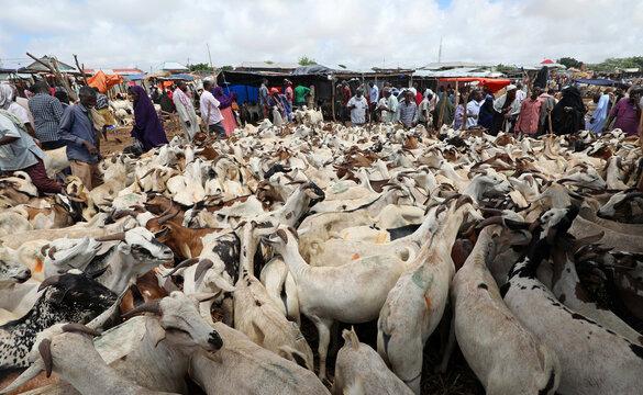 Somali traders and residents are seen at a livestock market ahead of the Eid al-Adha festival, amid the coronavirus disease (COVID-19) pandemic, in Mogadishu