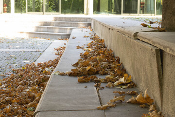 Printed roller blinds Roe leaves poured to the ground