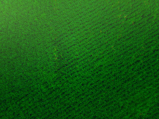 Aerial view of the corn field. Green corn field, top view, aerial photo from drone. Aerial view of green corn plants in a corn field.