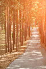 Road in forest. Nature landscape with sunbeam. Fall atmosphere. Sunset composition. Siberia woods. Ever green park. Magic wooden panorama. Hiking way