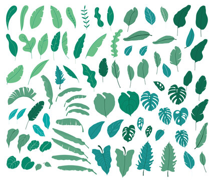 Tropical leaves vector collection. Set of silhouettes monochrome jungle exotic leaf, Philodendron, Palm leaves, Areca palm, Royal fern, Banana leaf isolated on white background. Vecor illustration