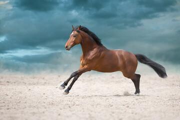Wall Mural - Bay stallion run in desert sand