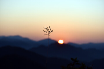Beautiful pic of wild plant and sunrise