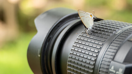Butterfly on the camera lens