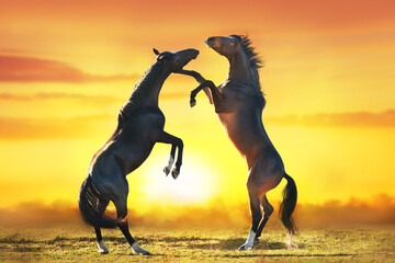 Wall Mural - Two horse rearing up against sunset