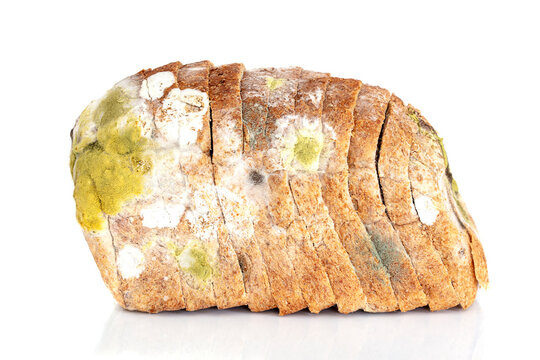 Mildew on a slice of bread. Old loaf of bread, covered with mildew isolated on white background