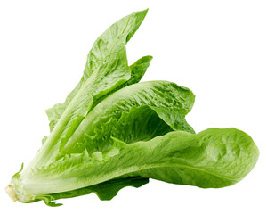 Romain Lettuce isolated on white background, clipping path, full depth of field
