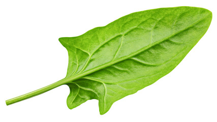 Spinach isolated on white background, clipping path, full depth of field