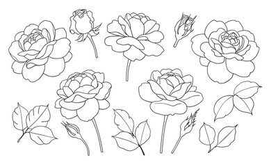 Contoured Simple Rose Flowers, Buds and Leaves Set