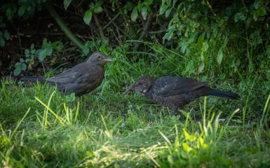 birds on the grass