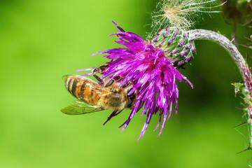 Printed roller blinds Bee bee on lavender