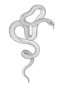 Vector Hand Drawn Monochrome Snake