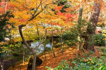 Kanazawa, Japan. Kenroku-en, an old garden, and one of the Three Great Gardens of Japan (Nihon Sanmeien), during autumn