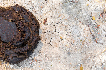 closeup cow dung on ground. top view. flat lay
