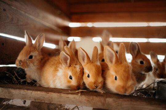 close up of baby rabbits at an eco farm