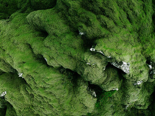 Nature green abstract background. Volcanic moss lava field. Iceland landscape, aerial view from drone, fat lay