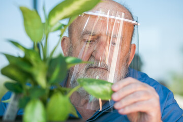 old man with protective visor touching a leaf of a plant