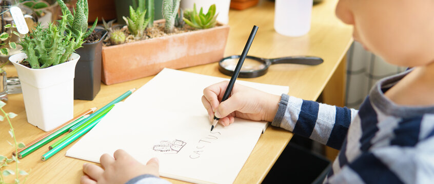 Hands of young child drawing and writing word 'cactus' on paper notebook on wooden table with color pencils and indoor plants in front. Nature education, Montessori and Fine motor skills development.