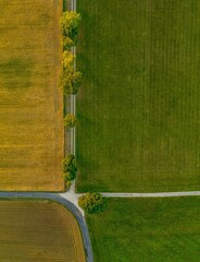 Top view from a drone at a avenue with green trees in a row from above.
