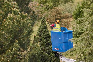 Gardener pruning a cypress on a crane. Seasonal maintenance