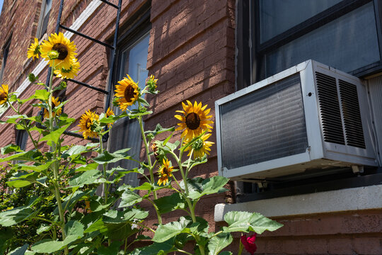 Window Air Conditioning Unit with Yellow Sunflowers in Astoria Queens New York during Summer