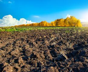 Plowed farm field